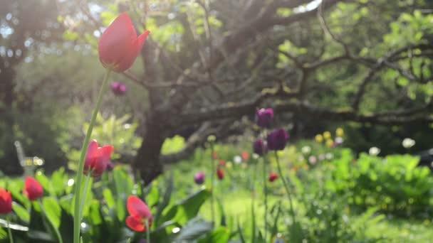 déšť květin zahrada