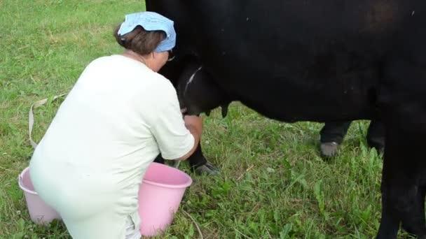 farmář černá kráva dojení