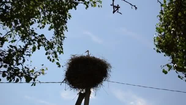 Čáp ptačí hnízdo stromu list