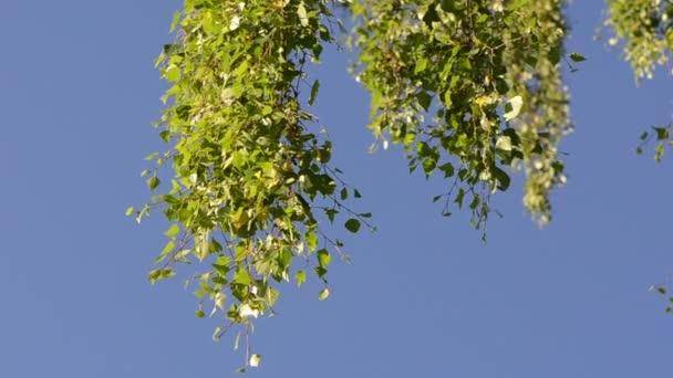 Blatt Baum Zweig Himmel