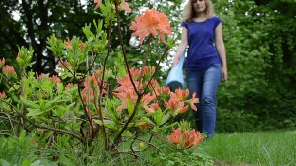 Woman rhododendron water