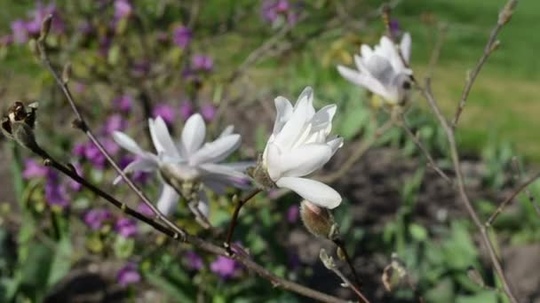 Magnolia bud květ květ