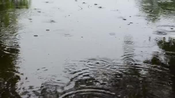pioggia acqua goccia bubble