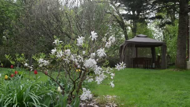 Magnolia Tulipán bower