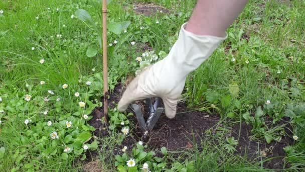 zahradníkem krtek past