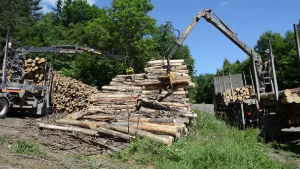 Men load log transport