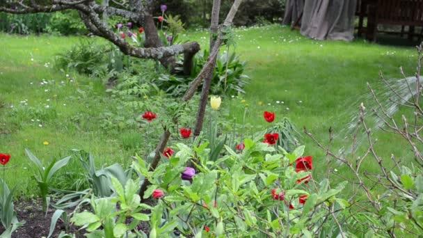 kézi víz tulipán virág
