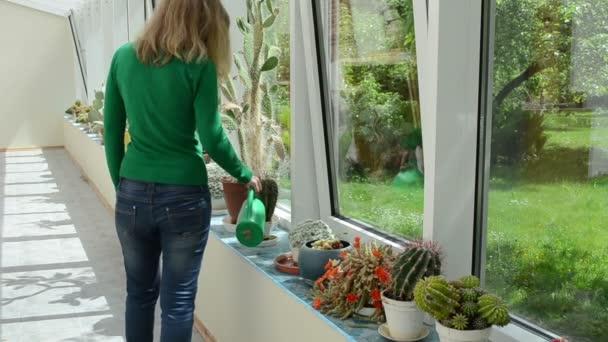 kaktus zalévání holka