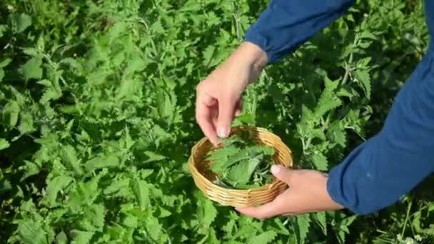zahradník balzám vyskladnění