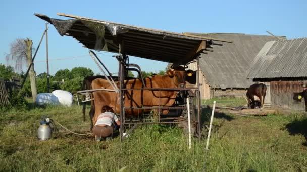 Dairy milk maid cow woman