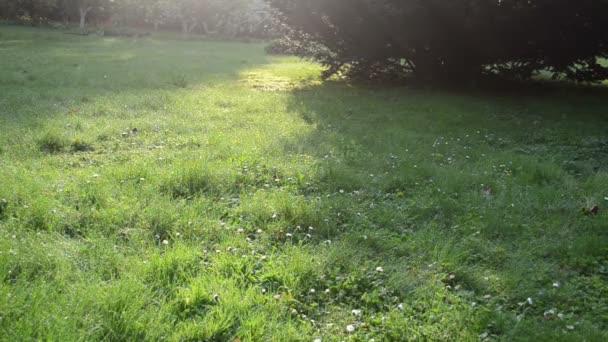 kapka Rosy trávy
