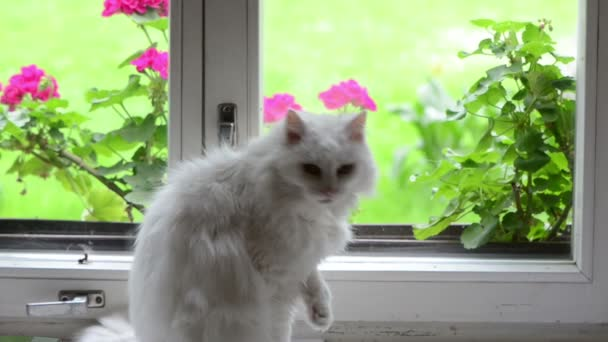 weiße Katze auf der Fensterbank