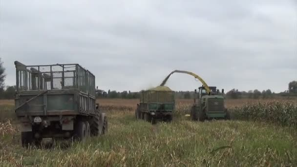 szemes kukorica mező