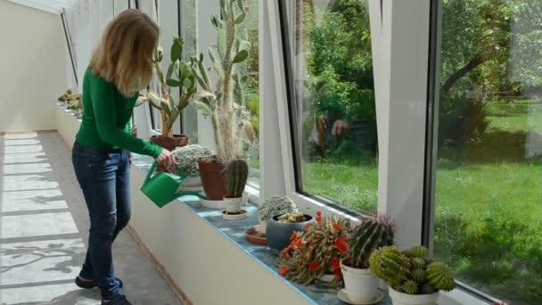 žena zalévání kaktusů