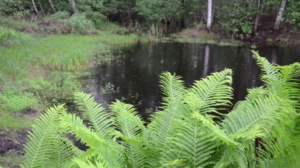 rybník deštivý den