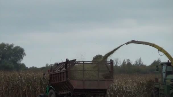 kukuřičné pole sklizeň