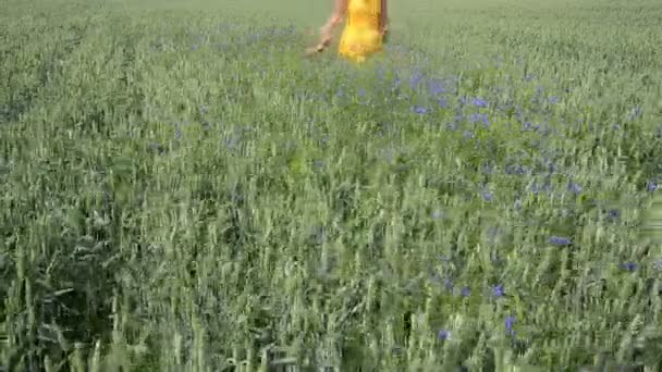Wheat cornflower girl