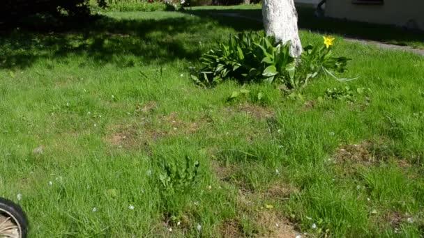noha posečené trávy květ