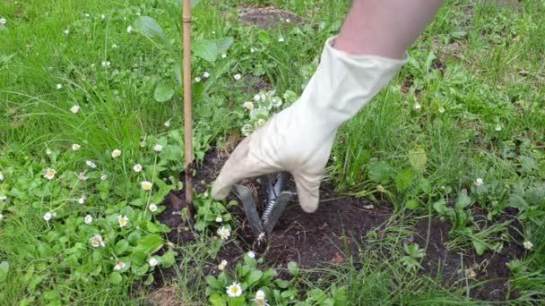 Maulwurfsfalle für Gärtner