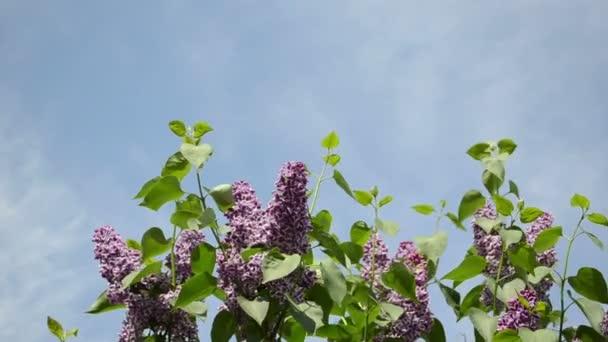 fialová Lila větvička obloha