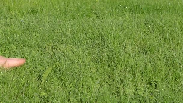 bosa holka trávě Rosa