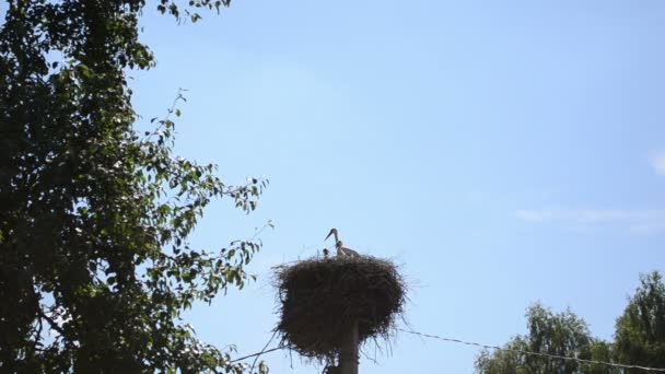 Stork bird nest pole sky