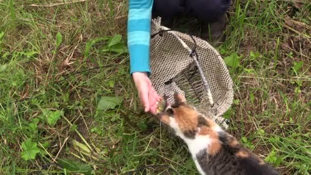 Hand give small fresh crucian fish for cat pet. Closeup