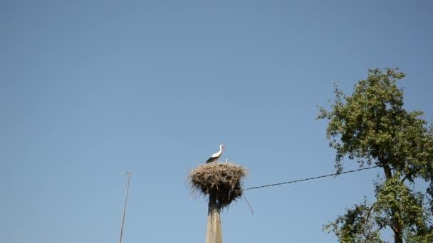 Čapí rodiny pták v hnízdě na elektřinu sloupu na modré obloze