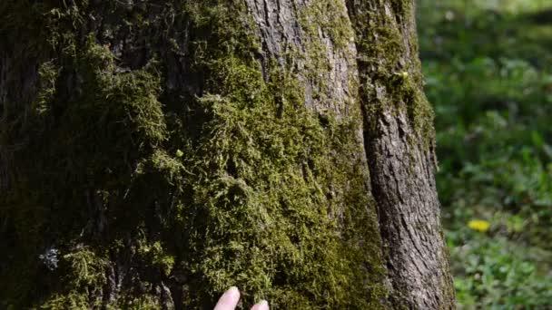 a nő kezét fogalmát séta mohás fa törzse.