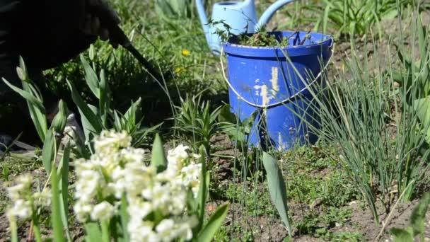 zahradník, plení záhonů v jarní zahradě