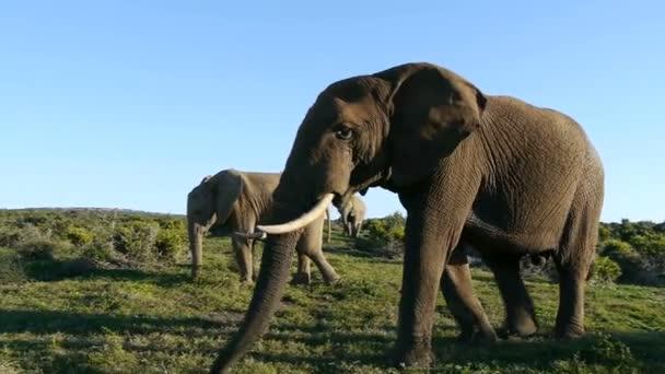 sloni v Jižní Africe