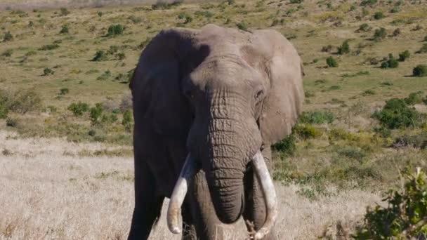 Elefántok Dél-Afrikában