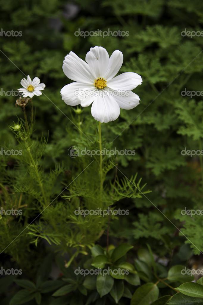 kleine weiße blume — Stockfoto © gjohnstonphoto #12508853