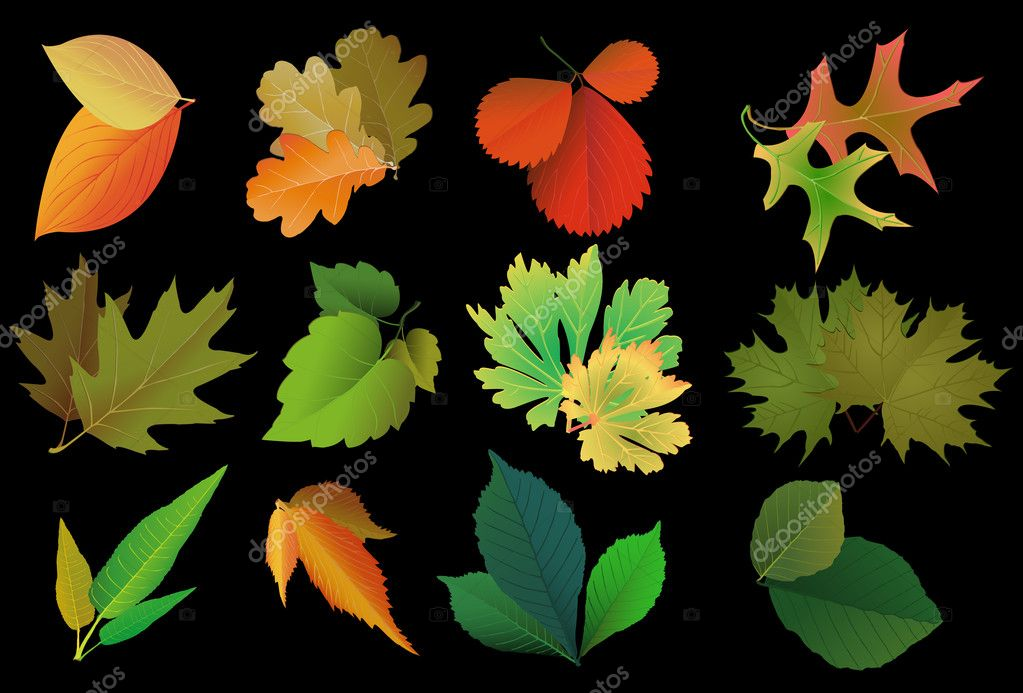 Set of leaves of different trees
