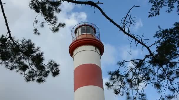 Leuchtturm und Kiefernzweige am Himmel