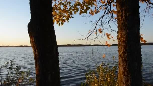 Őszi maples arany lombozat és a szél
