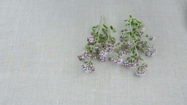 divoké majoránkou čerstvé bylinky na plátna