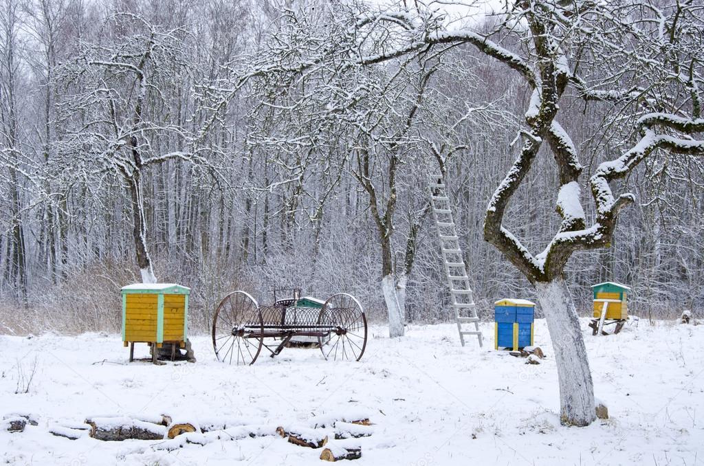 Winter time in old rural garden