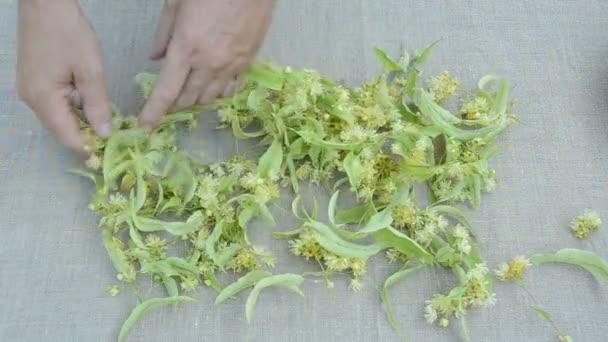 čerstvý lékařské linden květy na plátna