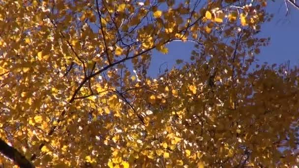 krásný podzimní čas březový les