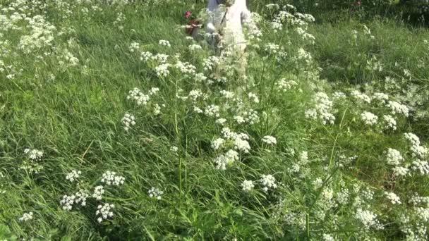 Muž s sekačky řezu mow mokré vysoké trávy na zahradě