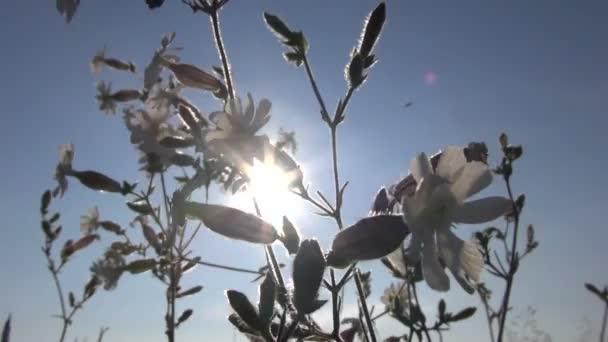 letní kytice ve větru a slunečního záření