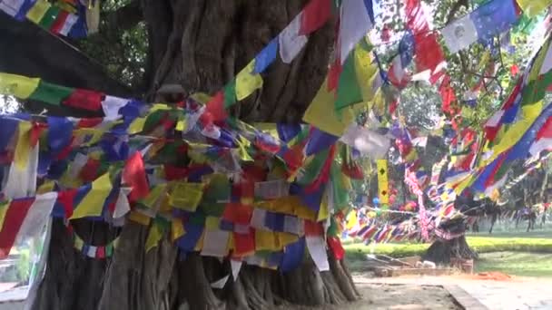 Tree with colorful buddhist flags in Lumbini, Nepal