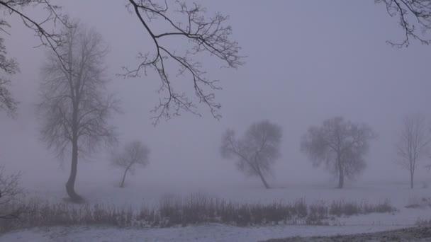 Zimní temné ranní mlha v parku