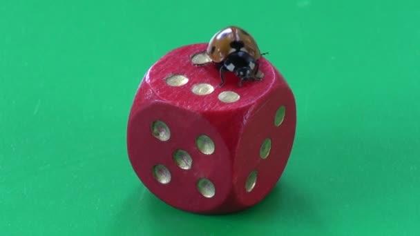 Úspěch koncepce .ladybug Beruška na červené kostky s číslem šest
