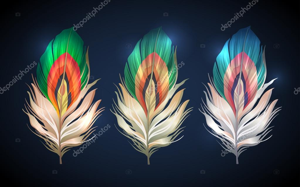 vector colorful feathers of sprind peacock bird