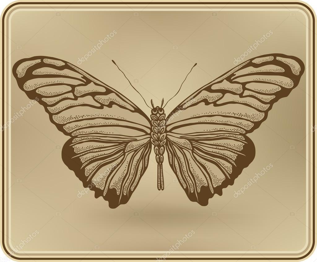 mariposa enmarcado, mano-dibujo. ilustración vectorial — Archivo ...