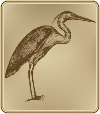 Heron bird, hand-drawing. Vector illustration.