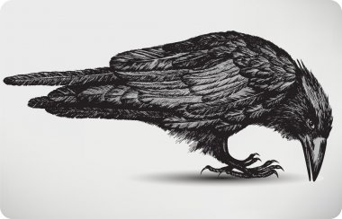 Black raven bird, hand-drawing. Vector illustration.