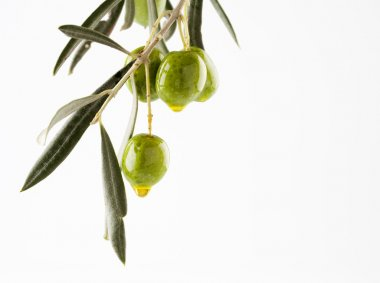 Olive branch with olives and oil isolated on white background with copyspace stock vector